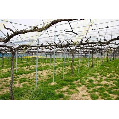 Результаты генеративной и клоновой селекции подвоев винограда в украине