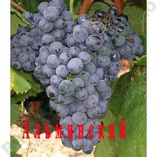 Саженцы винограда Альминский ⭐ привитые на КОБЕР 5ББ ⭐ СО-4 ⭐ РР 101-14 ⭐ корнесобственные ⭐ черенки