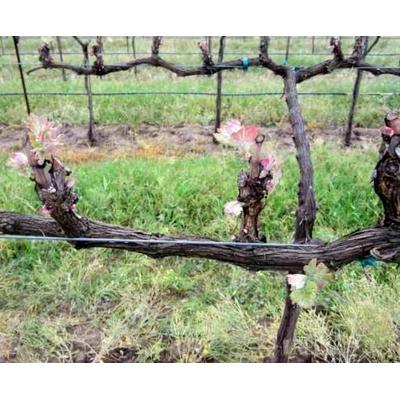 Определяем нагрузку виноградного куста