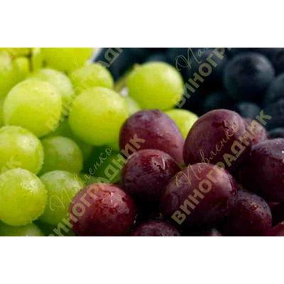 Как повысить урожайность винограда