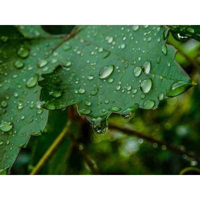 Основные причины низкого урожая винограда