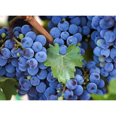 Питательные вещества, необходимые винограду